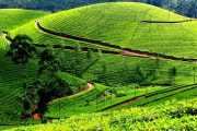 Tea Tour in india